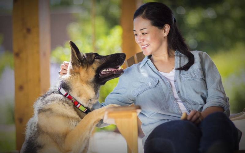 Human-Animal Relationships,  Human-Animal Bond, animal and human relationship, human and animal bond, human animal interaction definition, animal language talking with animal,animals have emotions, love for animals, pets, having a pet, anthrozoology