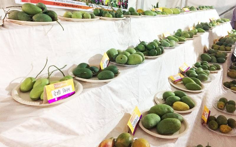 Lucknow, events in Lucknow, upcoming events in Lucknow, Lucknow mango festival, mango festival 2018, UP mango festival 2018, Uttar Pradesh